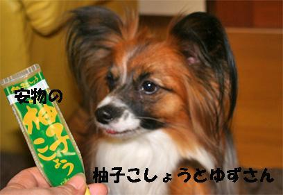 yuzu080123-3.jpg