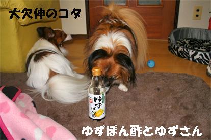 yuzu080123-4.jpg