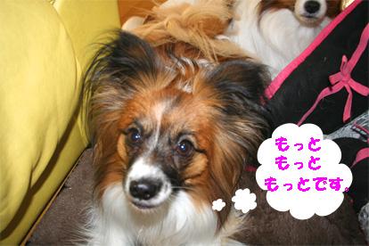 yuzu080125-1.jpg