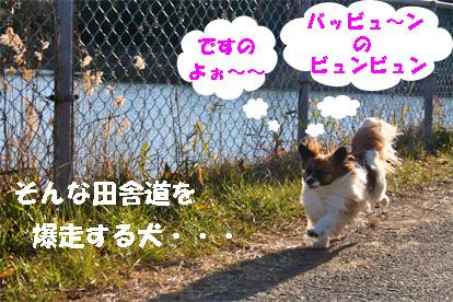 yuzu080127-1.jpg