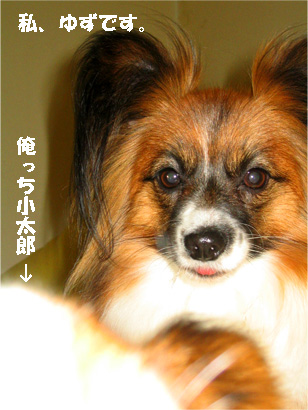 yuzu080130-1.jpg