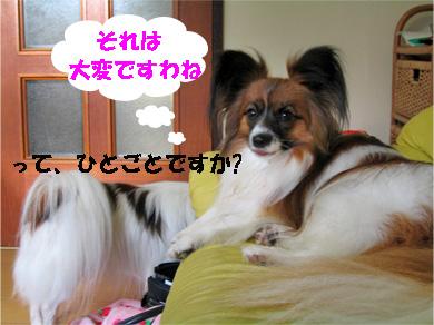 yuzu080131-3.jpg