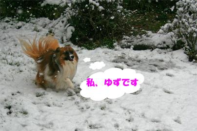 yuzu0802010-1.jpg