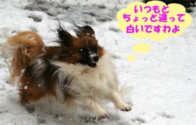 yuzu0802010-2.jpg