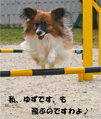 yuzu080204-1.jpg