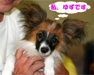 yuzu080211-1.jpg