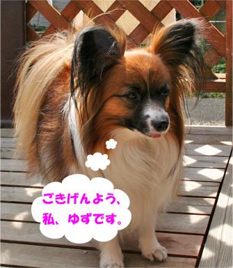 yuzu080212-1_20090212132634.jpg