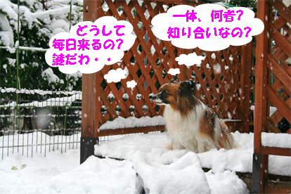 yuzu080212-2.jpg