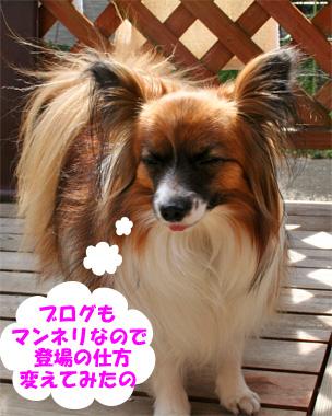 yuzu080212-2_20090212132640.jpg