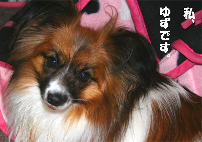 yuzu080212-3.jpg