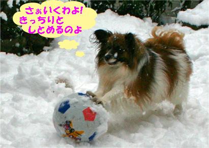 yuzu080213-1.jpg