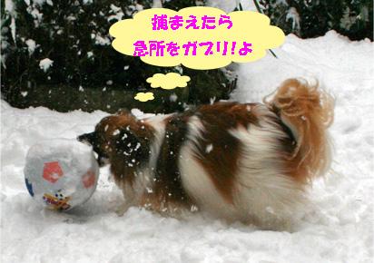 yuzu080213-2.jpg