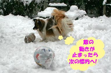 yuzu080213-3.jpg