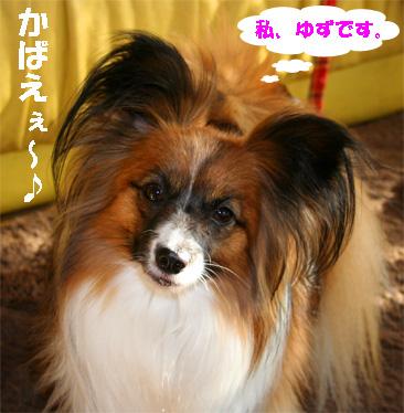 yuzu080214-1.jpg