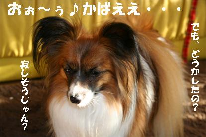 yuzu080214-2.jpg