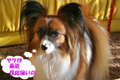 yuzu080214-3.jpg