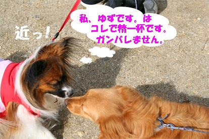 yuzu080218-1.jpg