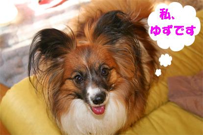 yuzu080221-5.jpg