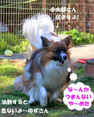 yuzu080222-1.jpg