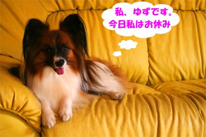 yuzu080225-1.jpg