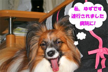 yuzu080227-1.jpg