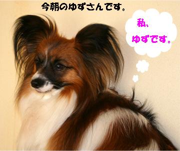 yuzu080228-1.jpg