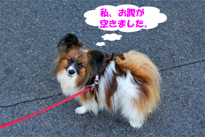 yuzu080305-1.jpg