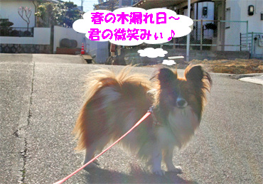 yuzu080307-1.jpg