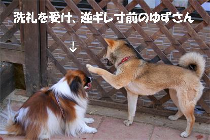 yuzu080311-1.jpg