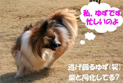 yuzu080312-1.jpg
