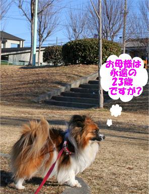 yuzu080319-1.jpg