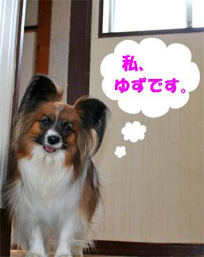 yuzu080321-1.jpg