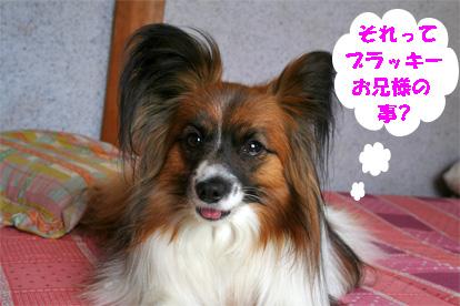 yuzu080321-2.jpg
