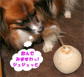 yuzu080324-1.jpg