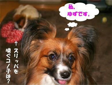 yuzu080326-1.jpg