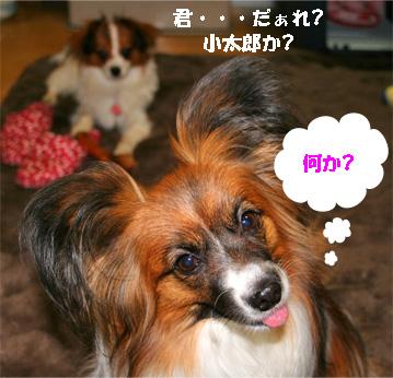 yuzu080326-2.jpg