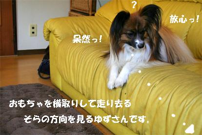 yuzu080328-1.jpg