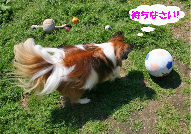 yuzu080401-1.jpg