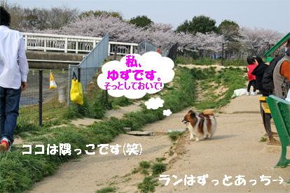 yuzu080408-1.jpg