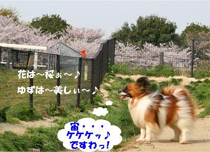yuzu080409-1.jpg