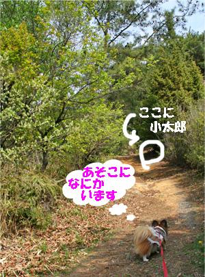 yuzu080415-1.jpg