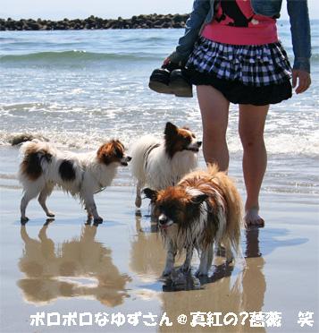 yuzu080424-1.jpg