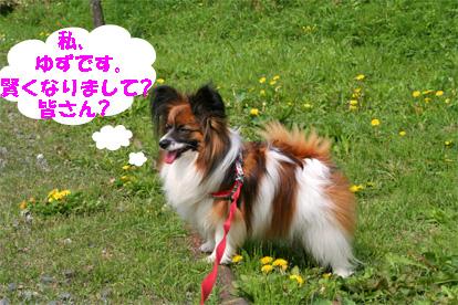yuzu080429-1.jpg