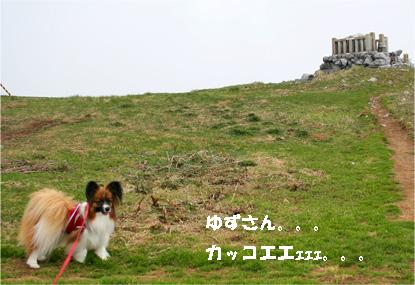 yuzu080430-1.jpg