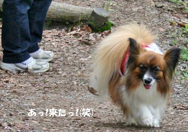 yuzu080502-1.jpg