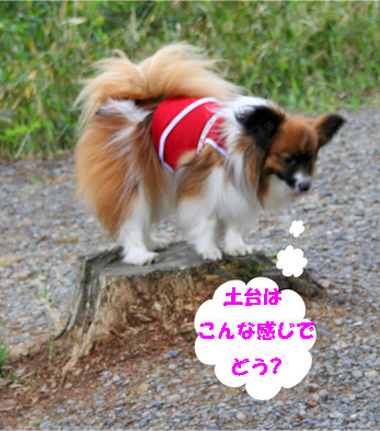 yuzu080502-4.jpg