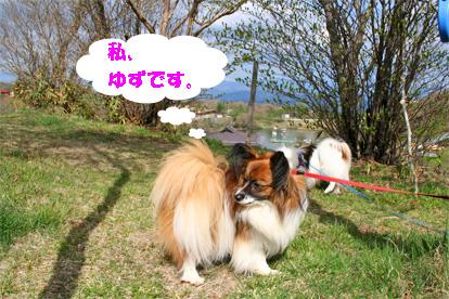 yuzu080507-1.jpg