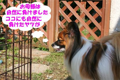yuzu080529-1.jpg