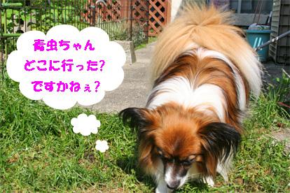 yuzu080529-2.jpg