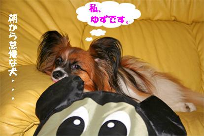 yuzu080602-1.jpg